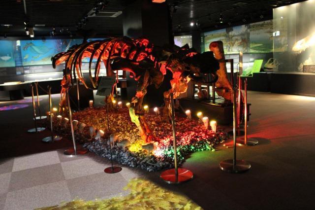 奥出雲多根自然博物館 ナイトミュージアム