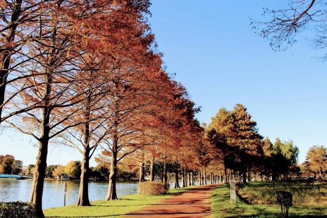みさと公園 紅葉