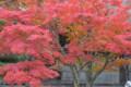 『京都新聞写真コンテスト湖南常楽寺の秋その3』