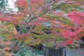 『京都新聞写真コンテスト湖南常楽寺の秋その2』