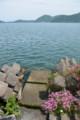 『京都新聞写真コンテスト琵琶湖沖島春の風景その2 』