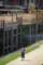 『京都新聞写真コンテスト神輿洗いの日の鴨川その2』