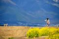 『京都新聞写真コンテスト 比良山と菜の花の風景その3』