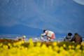 『京都新聞写真コンテスト 比良山と菜の花の風景その2』