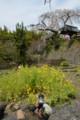 『京都新聞写真コンテスト地蔵禅院の春その1 』