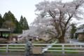 『京都新聞写真コンテスト桜と老婆 』