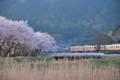 『京都新聞写真コンテスト春を走るその3 』