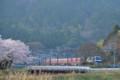『京都新聞写真コンテスト春を走るその1 』