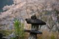 『京都新聞写真コンテスト桜と石灯籠 』