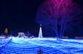 京都新聞写真コンテスト るり渓 大海のイルミネーション