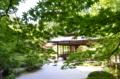 京都新聞写真コンテスト 新緑に囲まれて