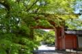 京都新聞写真コンテスト 新緑と赤門