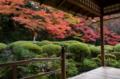 京都新聞写真コンテスト 錦秋の詩仙堂