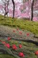 京都新聞写真コンテスト 梅は咲き椿は落ちる