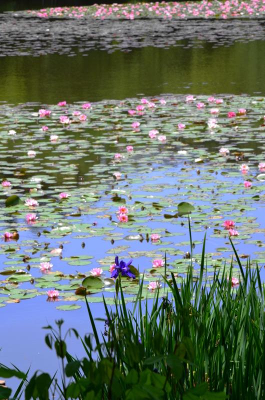 京都新聞写真コンテスト 初夏に清々しさ