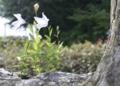 京都新聞写真コンテスト 自然木の植木鉢