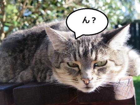 f:id:sneezycat:20160823172627j:plain