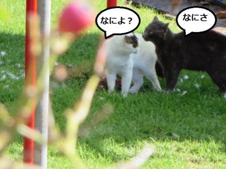 f:id:sneezycat:20160912193511j:plain