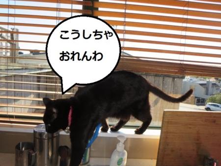 f:id:sneezycat:20160912193643j:plain