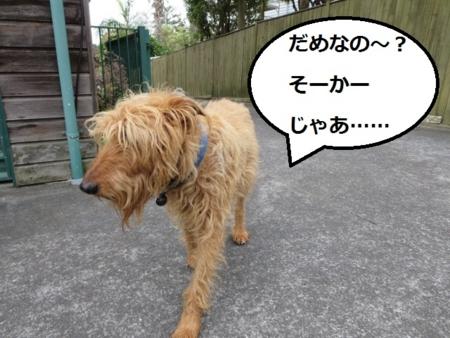 f:id:sneezycat:20160921113515j:plain
