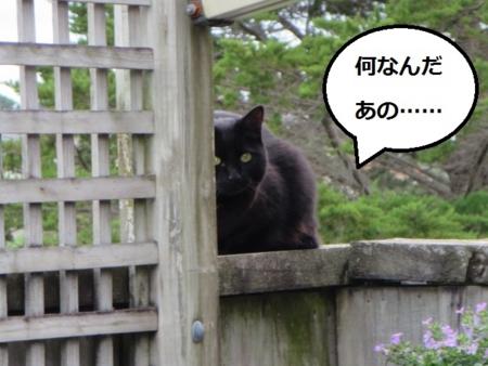 f:id:sneezycat:20160921113823j:plain