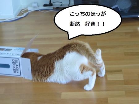 f:id:sneezycat:20170128190413j:plain
