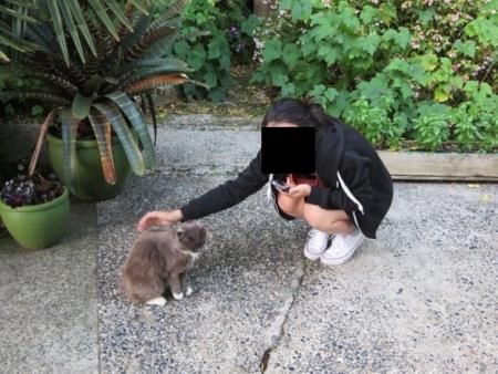 f:id:sneezycat:20170203055442j:plain