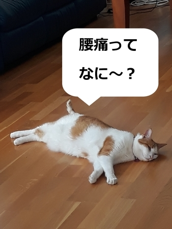 f:id:sneezycat:20190821145139j:plain