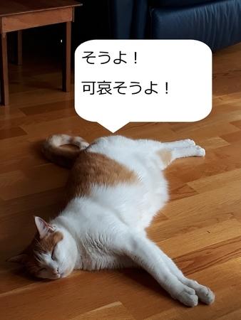 f:id:sneezycat:20200310100026j:plain