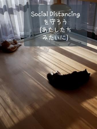 f:id:sneezycat:20200424113844j:plain