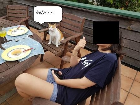 f:id:sneezycat:20200427170159j:plain