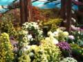 [風景] 弥彦神社の菊まつり2@新潟