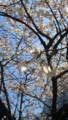 [twitter] 桜がきれいだ