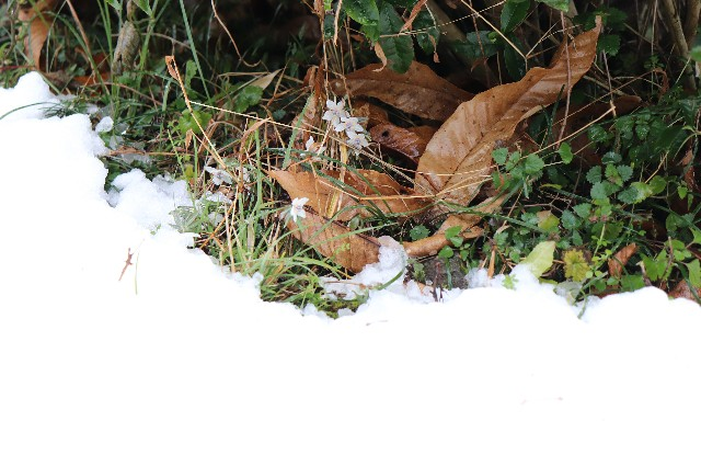 f:id:snow36:20200221220343j:image