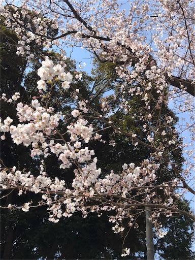 f:id:snow_ichigo:20170406132949j:image