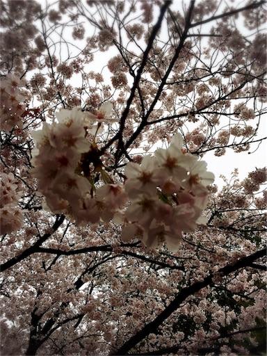 f:id:snow_ichigo:20170408091716j:image
