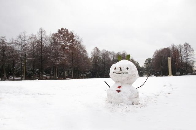 f:id:snowberry7358:20161130165046j:plain