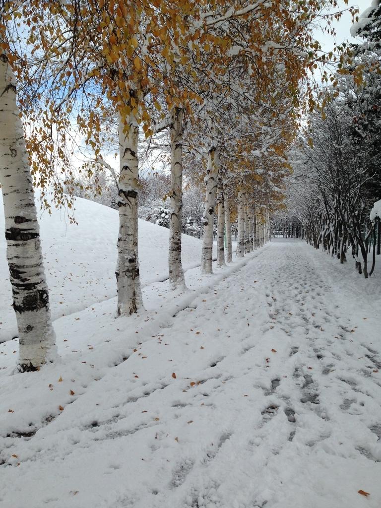 f:id:snowcrystal2000:20190223151617j:plain