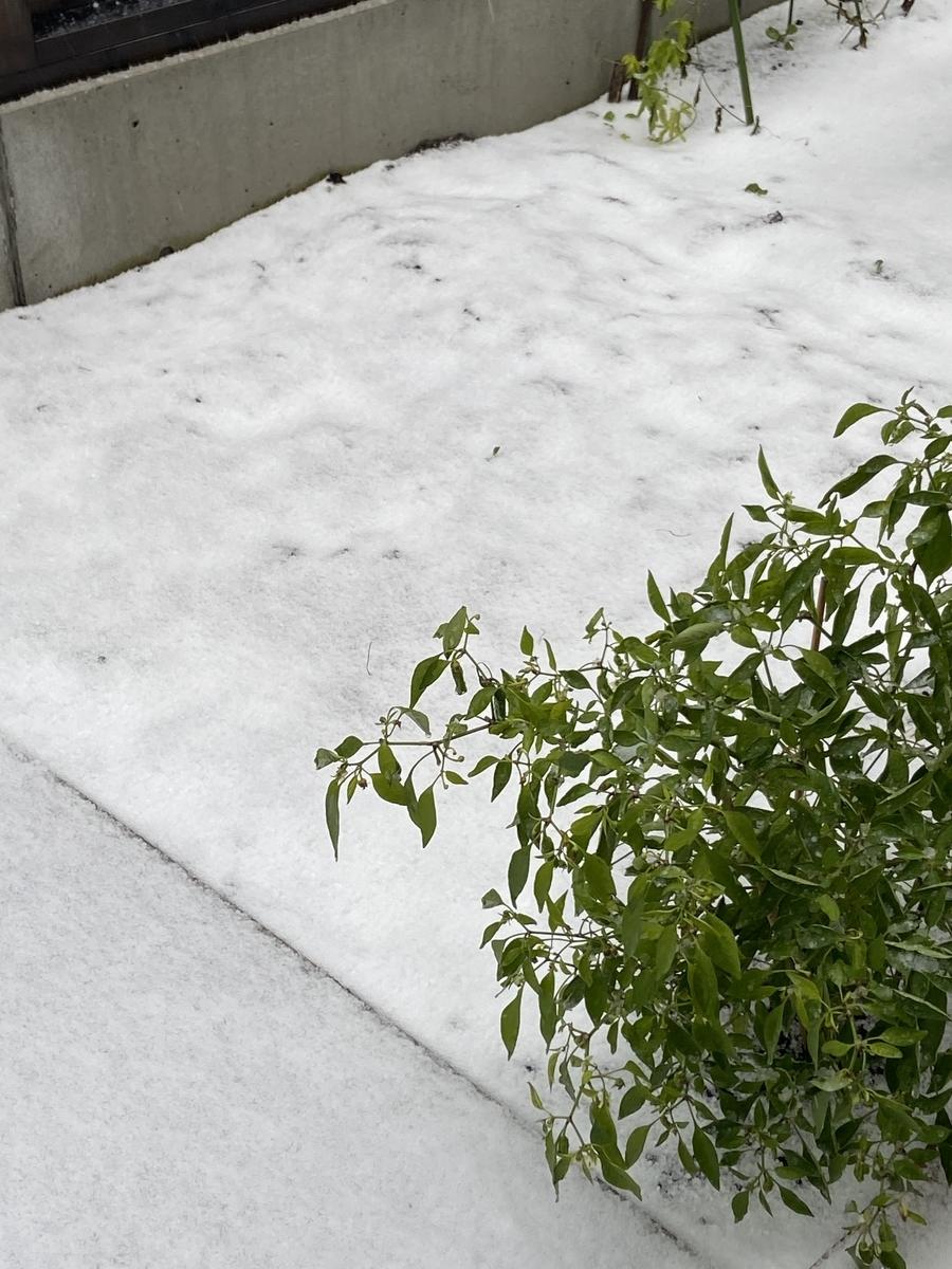 f:id:snowcrystal2000:20201109191807j:plain