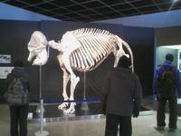 花子の骨格標本
