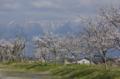 京都新聞写真コンテスト比良の春雪