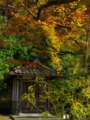 京都新聞写真コンテスト秋の地蔵堂