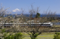 京都新聞写真コンテスト春近し