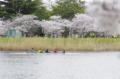 京都新聞写真コンテスト水温む頃
