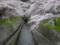 京都新聞写真コンテスト春の琵琶湖疏水