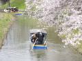 京都新聞写真コンテスト水郷の春