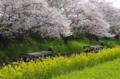 京都新聞写真コンテスト水郷めぐり