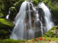京都新聞写真コンテスト鶏鳴の滝