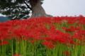 京都新聞写真コンテスト秋色に染まる