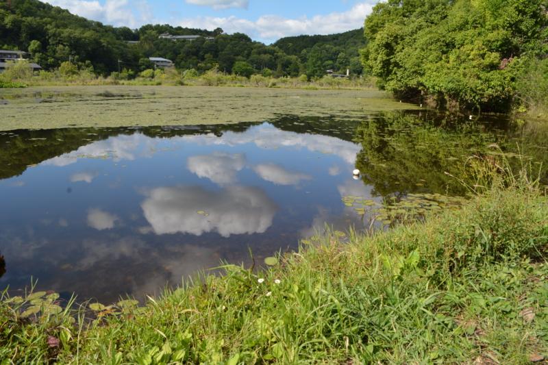 京都新聞写真コンテスト 池の中の雲